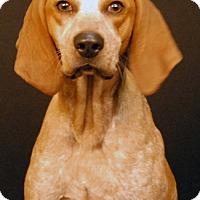Adopt A Pet :: Elliotta - Newland, NC