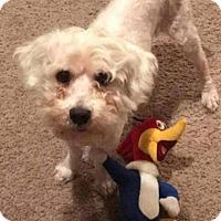 Adopt A Pet :: JJ - Killian, LA
