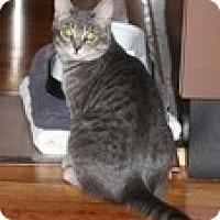 Adopt A Pet :: Teagan - Vancouver, BC