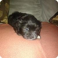 Adopt A Pet :: Elena - Marlton, NJ