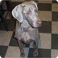 Adopt A Pet :: Azra - Eustis, FL