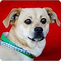 Adopt A Pet :: Juliet - Poway, CA
