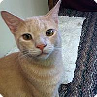 Adopt A Pet :: Buff - Phoenix, AZ