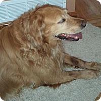 Adopt A Pet :: Liberty Bell - Denver, CO