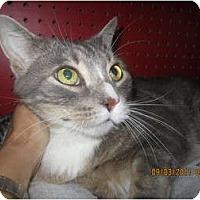 Adopt A Pet :: Irwin - Sterling Hgts, MI