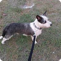 Adopt A Pet :: FRANKIE - Wilmington, NC