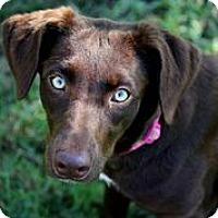 Adopt A Pet :: Hazel - Austin, TX