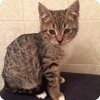 Adopt A Pet :: Saki - Long Beach, NY