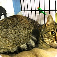 Adopt A Pet :: Beauty - Geneseo, IL