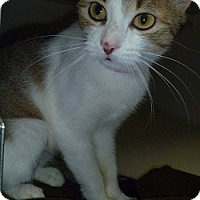 Adopt A Pet :: Reba - Hamburg, NY