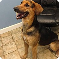 Adopt A Pet :: Lisbeth - Greeneville, TN