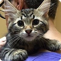 Adopt A Pet :: Lou Lou - McHenry, IL