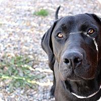 Adopt A Pet :: Luke - Logan, UT