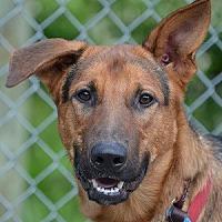 Adopt A Pet :: Axel - Southeastern, PA
