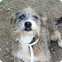 Adopt A Pet :: Waylan - Smithtown, NY