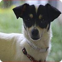 Adopt A Pet :: Peanut - Boynton Beach, FL