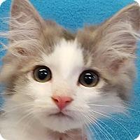 Adopt A Pet :: Grayson - Lexington, KY