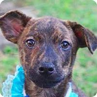Adopt A Pet :: Quie - San Ramon, CA