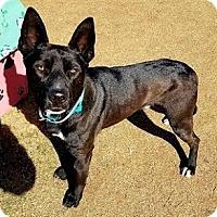 Adopt A Pet :: Iroh - Athens, GA