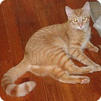 Adopt A Pet :: Gulf & Texaco - Merrifield, VA
