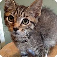 Adopt A Pet :: Joe and Michael - East Hanover, NJ