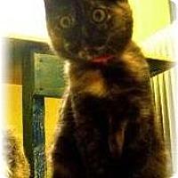Adopt A Pet :: Jenny - Shelton, WA