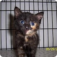 Adopt A Pet :: Dimples - Island Park, NY