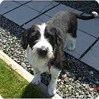 Adopt A Pet :: Salty - Vancouver, BC