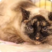 Adopt A Pet :: Samantha - Sacramento, CA