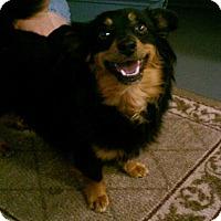 Adopt A Pet :: Haddie - Meridian, ID