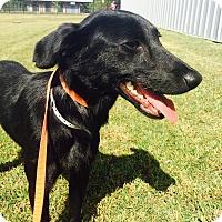 Adopt A Pet :: DUDLEY - Nashville, TN