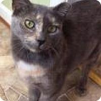 Adopt A Pet :: Parker - Breinigsville, PA