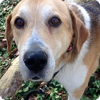Adopt A Pet :: Lucky Jack - Fennville, MI