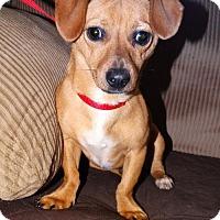Adopt A Pet :: Atrayou - Tacoma, WA