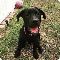 Adopt A Pet :: Jazzy - San Diego, CA