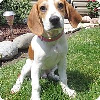 Adopt A Pet :: Wriston - West Chicago, IL