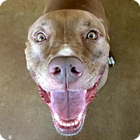 Adopt A Pet :: Midge - Austin, TX
