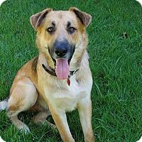 Adopt A Pet :: Marlon (Cat Friendly) - Greeneville, TN