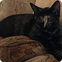 Adopt A Pet :: Gidget - Garland, TX