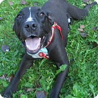 Adopt A Pet :: Finn - Menomonie, WI