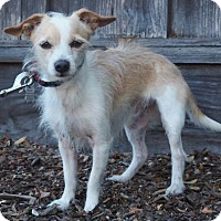 Adopt A Pet :: Patch - Corona, CA
