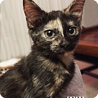 Adopt A Pet :: Tilly - Mason, MI