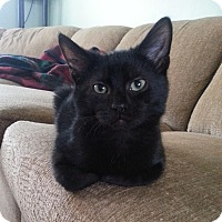 Adopt A Pet :: Bowie - Lombard, IL