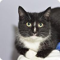 Adopt A Pet :: Blink - Medina, OH