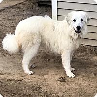 Adopt A Pet :: Cassie - Hainesville, IL