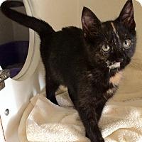 Adopt A Pet :: Zoe - Breese, IL