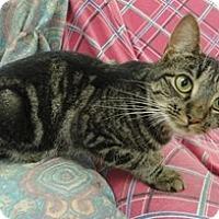 Adopt A Pet :: Pancake - Stuart, VA