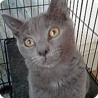 Adopt A Pet :: Mindy - Germansville, PA