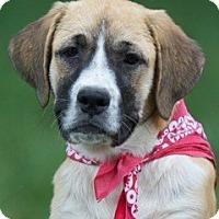 Adopt A Pet :: Paisley - Providence, RI