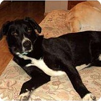Adopt A Pet :: Buster - In Maine! - kennebunkport, ME